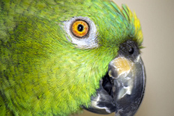 Max, my parrot